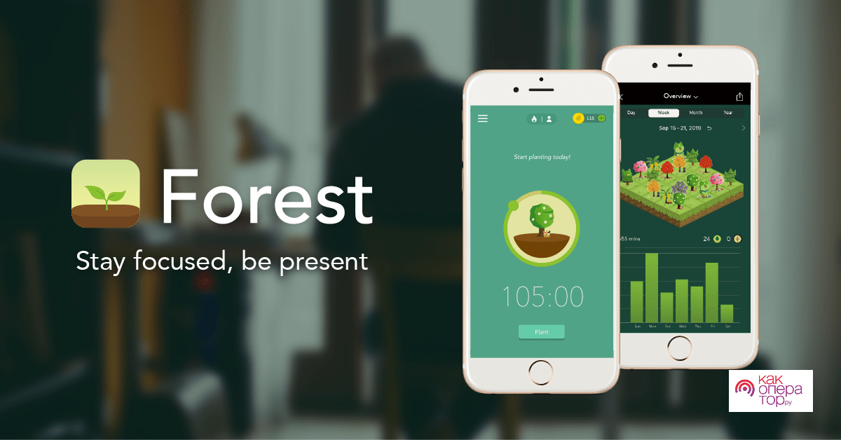 Forest - Stay focused, be present